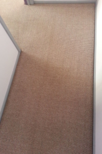 carpet-cleaning-urine-after